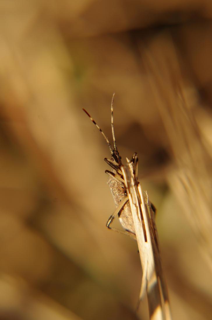Insect to sunset V by Arayashikinoshaka