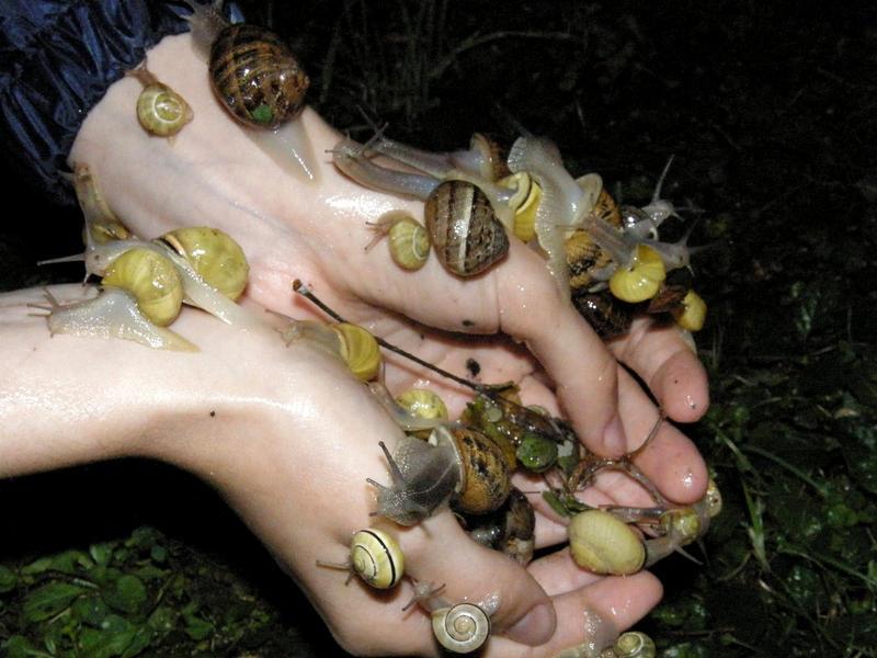 Snails friends by Arayashikinoshaka