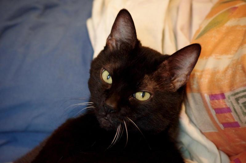 Black Cat Shiki