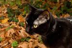 Autumn walk XIII