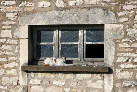 The cat of the disused factory