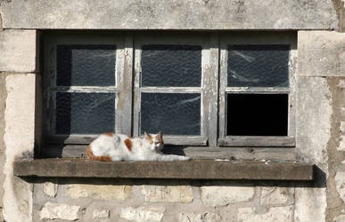 The cat of the disused factory II
