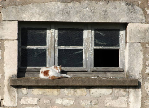 The cat of the disused factory III