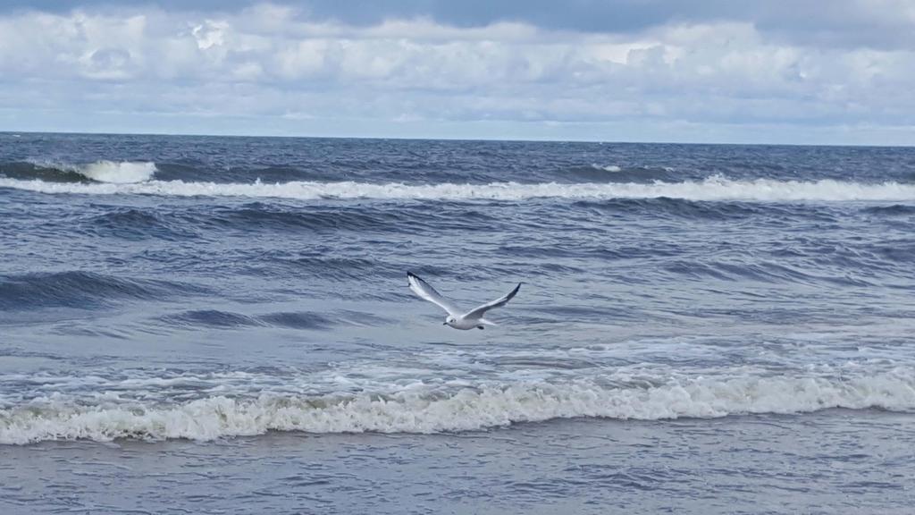 Seagull by Liarara
