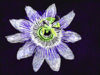 NZ Flower by Newsgomergirl