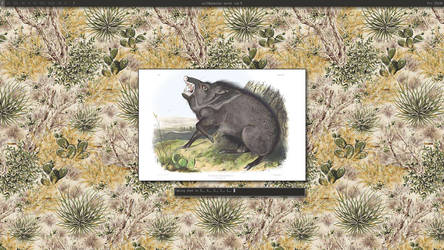 collared peccary by rstrcogburn