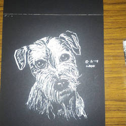 Doggie  by ordenboco