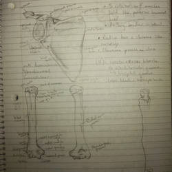 Anatomy notes by anakhe