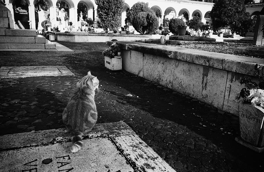 Cemetery cat in Rome by mudridedotcom