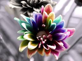 rainbow by samanthaamy