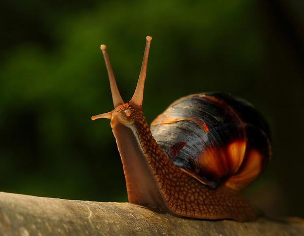 fairy tale forrest snail