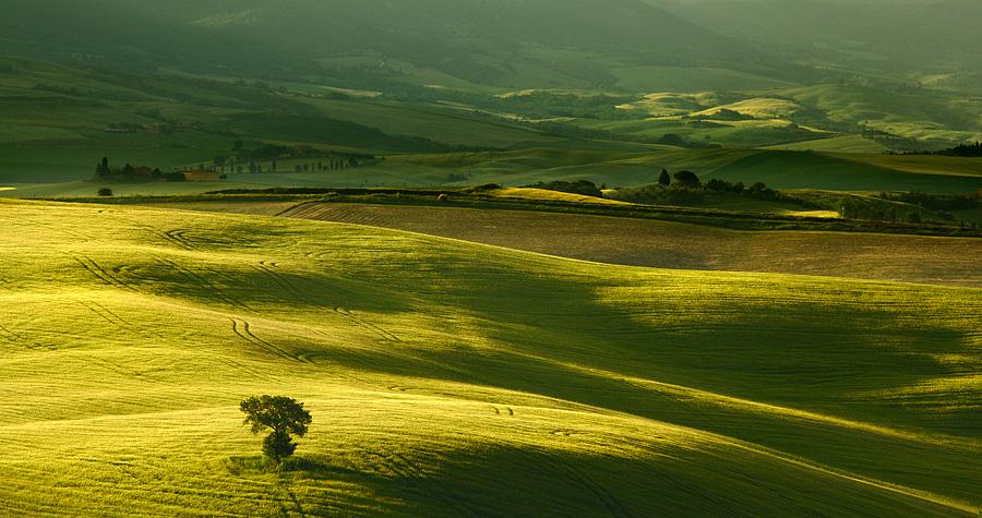 Shades of green by Addran