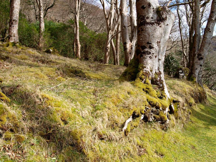 Earthy Greens by belhutton