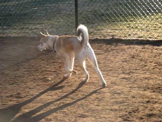 Canine Pose 2