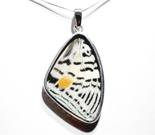 Real Butterfly Wing Jewelry by bflydesigns