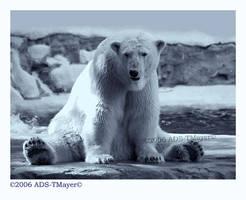 Polar Pose by Tlemetry