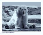 Polar Pose
