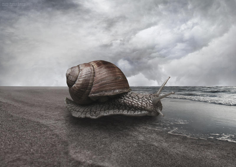 Snail by OtravitusBianca