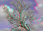 Early Spring 3D Anaglyph