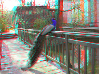 The Peacock 3 3D Anaglyph by yellowishhaze