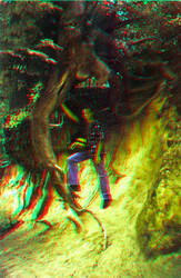 The Root 3D Anaglyph