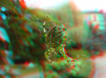 Araneus 2 3D Anaglyph
