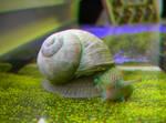 Snail 3D Anaglyph