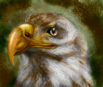 The eagle by BarelyBeru