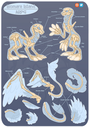 Isomara Skeleton Anatomy Guide by SlayersStronghold