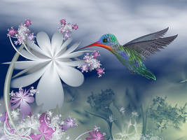 Humming Bird by segami