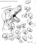 Head Anatomical Study Part2