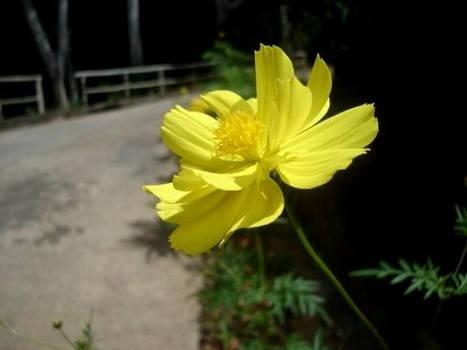 flower lovin' 2