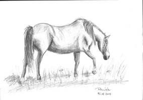 Horse by parsek76