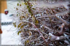Frozen 6 by parsek76