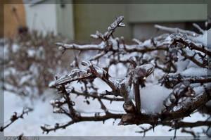 Frozen 7 by parsek76