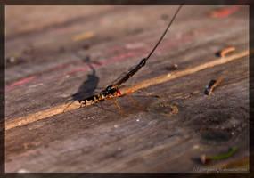 Some bug 2 by parsek76