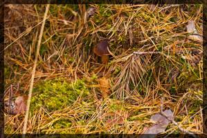 Mushroom 5 by parsek76