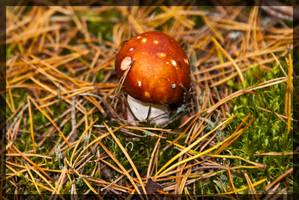 Mushroom 6 by parsek76