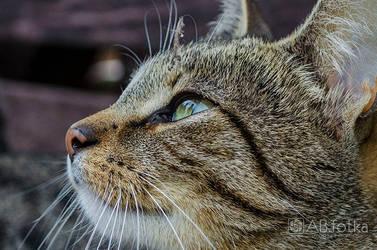 Cat 03 by parsek76