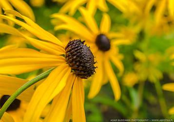 Yellow flowers by parsek76