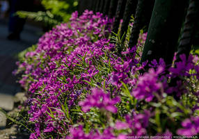 Blooming fence by parsek76
