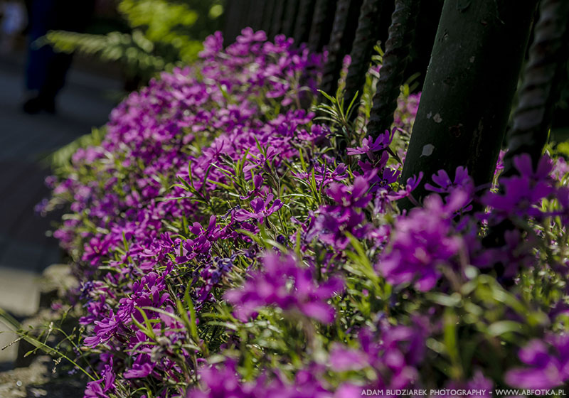 Blooming fence by parsek76