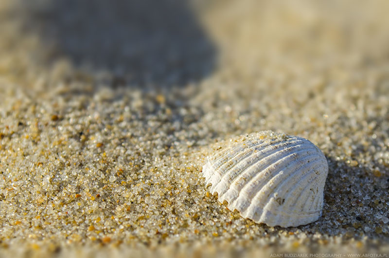 Shell on the sand by parsek76