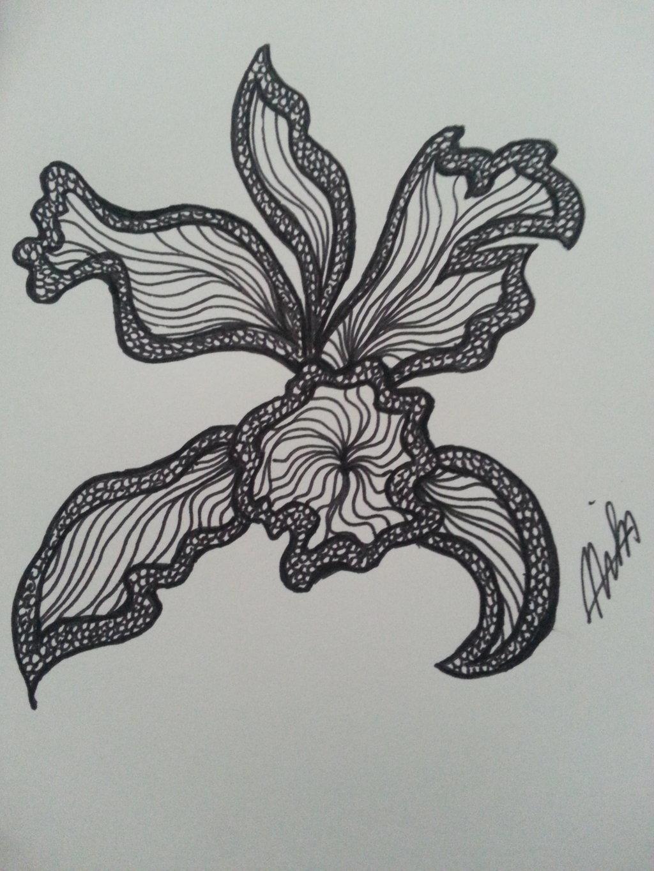 Cattleya V1 By Xmissai On Deviantart