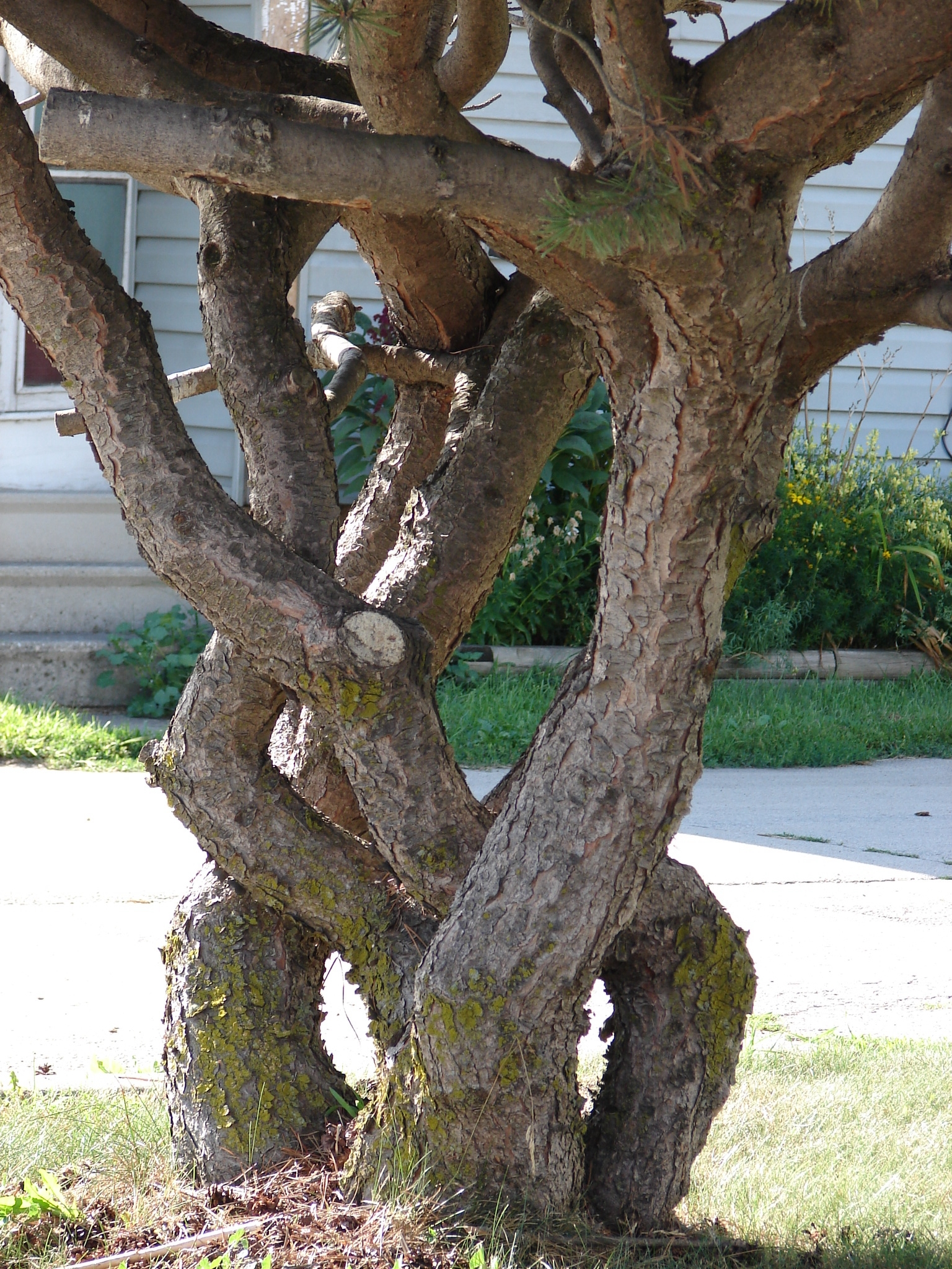 Braided wood tree trunks by fantasystock on deviantart - Flowers that grow on tree trunks ...