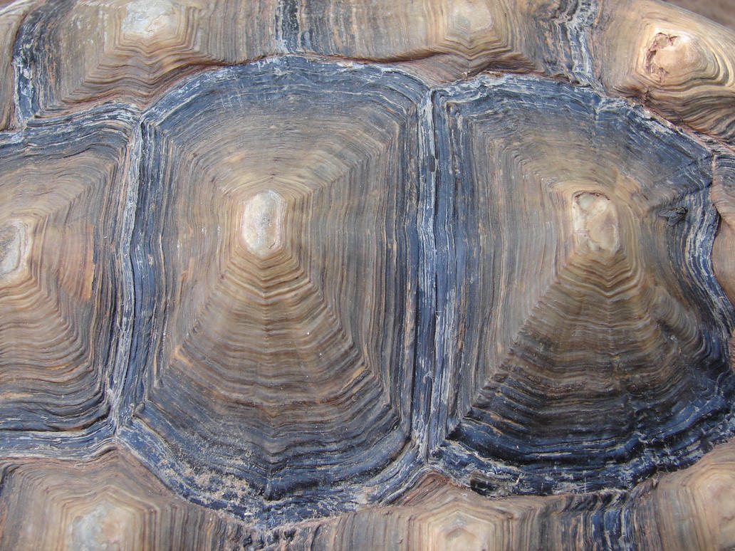 Bumpy Tortoise Shell Texture by FantasyStock
