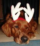 Francis Xmas Reindeer Dog 3 by FantasyStock