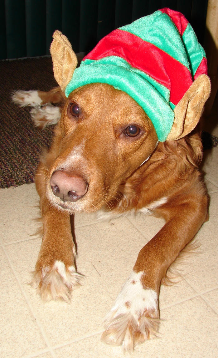 Tails Christmas Elf Dog 2 by FantasyStock