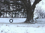Tire Swing with Tree