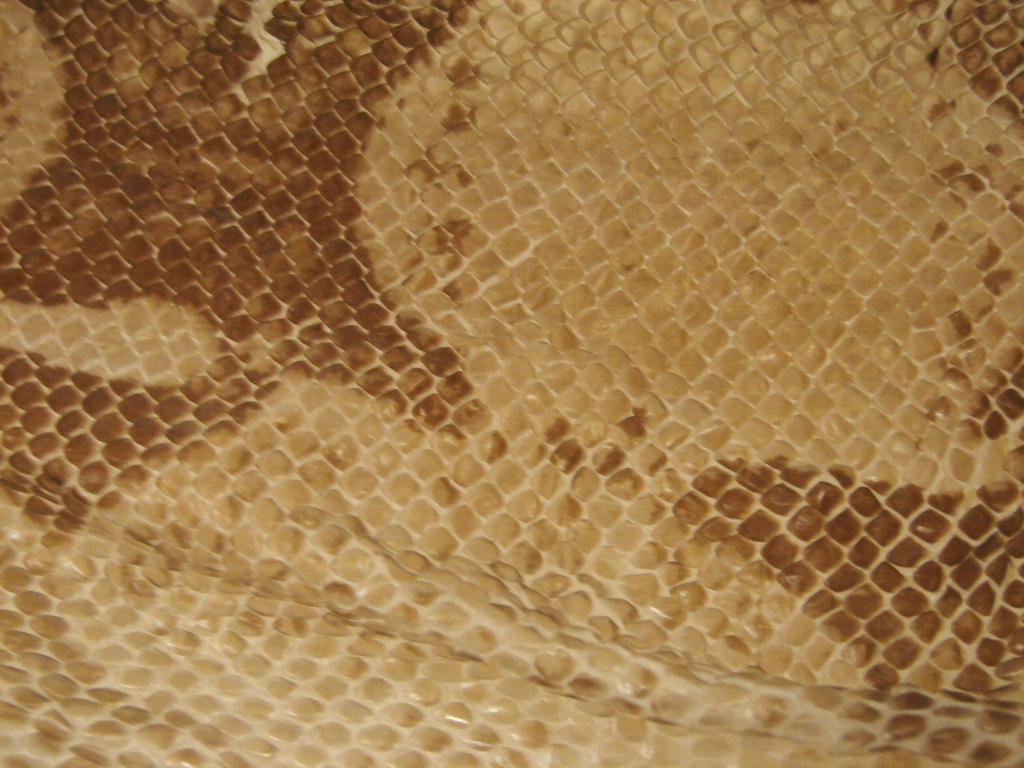 Scaly Snake Skin Texture by FantasyStock